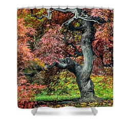 Japanese Maple - Aged To Perfection Shower Curtain