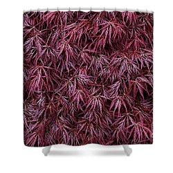 Japanese Maple Garnet Shower Curtain