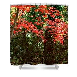 Japanese Maple Shower Curtain by John Pagliuca