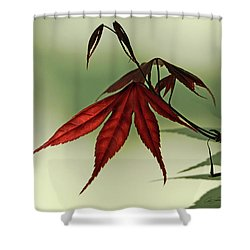 Japanese Maple Leaf Shower Curtain by Ann Lauwers