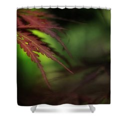 Shower Curtain featuring the photograph Japanese Maple by Mike Eingle