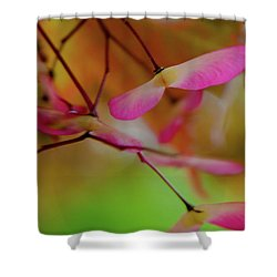 Shower Curtain featuring the photograph Japanese Maple Seedlings by Brenda Jacobs