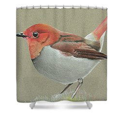 Japanese Robin Shower Curtain by Gary Stamp