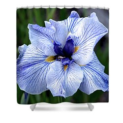 Japanese Water Iris In Blue 2695 H_3 Shower Curtain