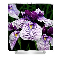 Japanese Water Iris In Purple 2714 H_2 Shower Curtain