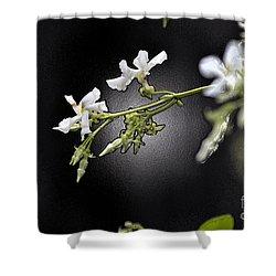 Jasmine In The Dark Shower Curtain