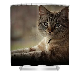 Shower Curtain featuring the photograph Jaspurr by Kim Henderson