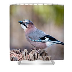 Jay In Profile Shower Curtain
