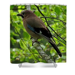 Jay Shower Curtain