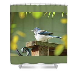 Scrub Jay On A Fence - Images From The Fall Garden Shower Curtain