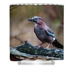Shower Curtain featuring the photograph Jay Watch by Torbjorn Swenelius