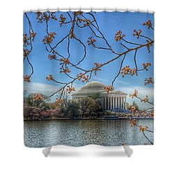 Jefferson Memorial - Cherry Blossoms Shower Curtain by Marianna Mills