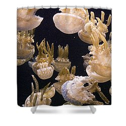 Jelly Parade Shower Curtain