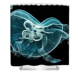 Jelly Solo Shower Curtain by Wayne King