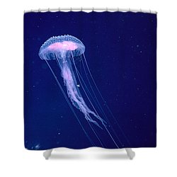 Jellyfish Shower Curtain by Dave Fleetham - Printscapes