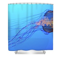 Jellyfish Shower Curtain by Joe  Palermo