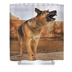 Jerry Lee  Shower Curtain by Brian Cross