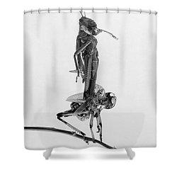 Jerusalem: Locusts, 1915 Shower Curtain by Granger