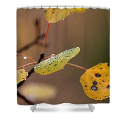 Jewels Of Autumn Shower Curtain by Jim Garrison