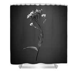 Joe Pye 1 Shower Curtain by Simone Ochrym