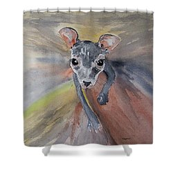 Joey In Mums Pouch Shower Curtain