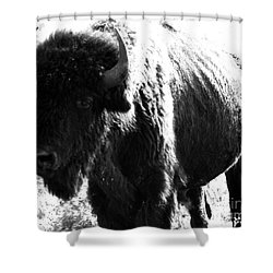Join The Party Shower Curtain by Amanda Barcon