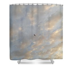 Jonathan Livingston Seagull Shower Curtain