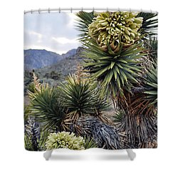 Joshua Tree Bloom Rainbow Mountain Shower Curtain