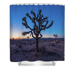 Joshua Tree Glow Shower Curtain by Robert Loe