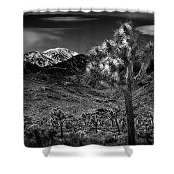 Shower Curtain featuring the photograph Joshua Tree In Black And White In Joshua Park National Park With The Little San Bernardino Mountains by Randall Nyhof