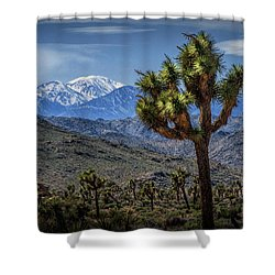 Shower Curtain featuring the photograph Joshua Tree In Joshua Park National Park With The Little San Bernardino Mountains In The Background by Randall Nyhof