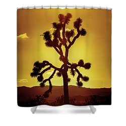Shower Curtain featuring the photograph Joshua Tree by Stephen Stookey