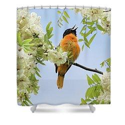 Joyful Oriole Shower Curtain by Anita Oakley