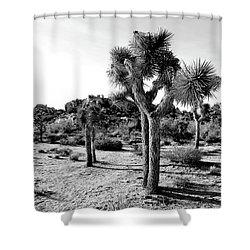 Jt 30 Shower Curtain