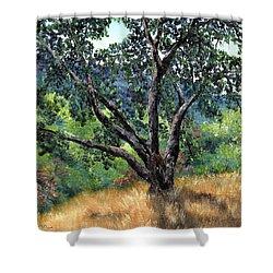 Juan Bautista De Anza Trail Oak Shower Curtain by Laura Iverson