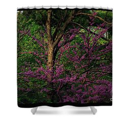 Judas In The Forest Shower Curtain