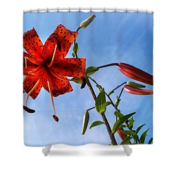 July Shower Curtain by Joy Nichols
