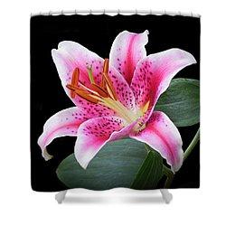 July Stargazer Lily Shower Curtain