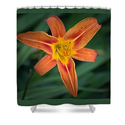 July Tiger Lily Shower Curtain
