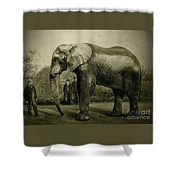 Jumbo The Elepant Circa 1890 Shower Curtain by Peter Gumaer Ogden