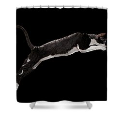Jumping Cornish Rex Cat Isolated On Black Shower Curtain