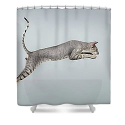 Jumping Peterbald Sphynx Cat On White Shower Curtain