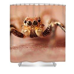 Jumping Spider Shower Curtain by Venura Herath