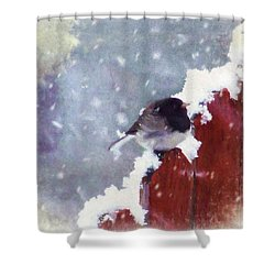 Junco In The Snow, Square Shower Curtain