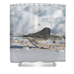 Junco Under Feeder Shower Curtain
