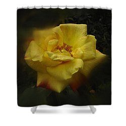 Shower Curtain featuring the photograph June 2016 Rose No. 1 by Richard Cummings