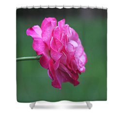 Shower Curtain featuring the photograph June Rose by Vadim Levin