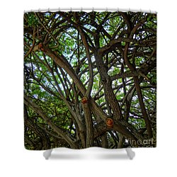 Jungle Maze Shower Curtain