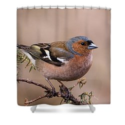 Juniper Bird Shower Curtain