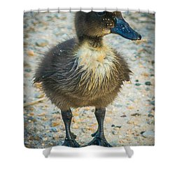 Shower Curtain featuring the photograph Just A Baby by Michael Sussman